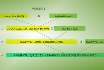 Pasos para Simbrah método 1