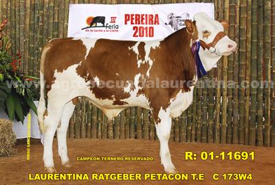 Ternero Simmental campeón reservado feria de Pereira 2010