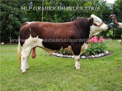 Toro Simmental Graber Charles 778-6