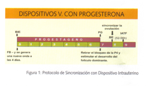 Protocolo de sincronizacion con dispositivo intrauterino