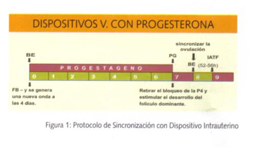 Protocolo de sincronizacion con dispositivo intrauterino